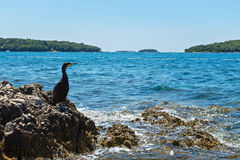Cormorant on the rocky beach in Istria Royalty Free Stock Image
