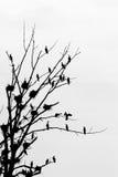 Cormorant silhouette Stock Photography