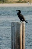 Cormorant su una colonna Fotografia Stock