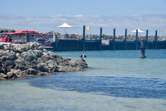 Cormorant Sunning Stock Images