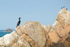 Cormorant sur une roche Photographie stock libre de droits
