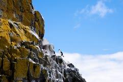 Cormorant - Tasmania Royalty Free Stock Photography