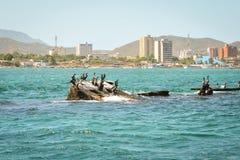 cormorants immagini stock libere da diritti