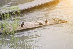 Cormorants and bamboo raft Stock Photo