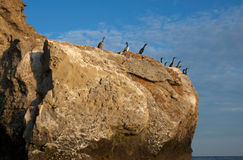 Cormorants bask in the sun. Royalty Free Stock Photo