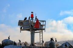 Cormorants on a coast guard lookout station stock photo
