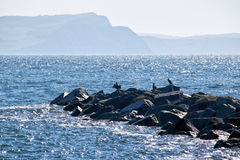 Cormorants At The Cobb. Cormorants along the rocks at the end of the Cobb at Lyme Regis royalty free stock photos