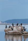 Cormorants. Cormorant fishing on mediterranean sea Royalty Free Stock Images