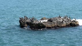 Cormorants on the island in the sea stock video