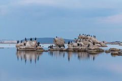 Cormorants. The Cormorants on mediterranean sea Stock Photography