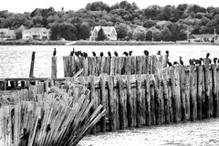 Cormorants on an old pier Royalty Free Stock Image