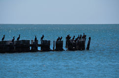 Cormorants on the Pilings Royalty Free Stock Photo