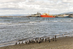 Cormorants in Punta Arenas. Punta Arenas is a commune and the capital city of Chile's southernmost region, Magallanes and Antartica Chilena. The city was Royalty Free Stock Images