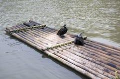 cormorants raft standing royaltyfria bilder