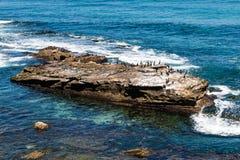 Cormorants Resting on Rock Formation in La Jolla, California Royalty Free Stock Image