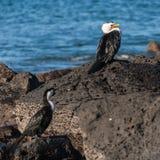 Cormorants resting on rocks Royalty Free Stock Photos