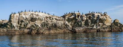 Cormorants on rock islet in southern British Columbia. stock photos