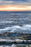 Cormorants on rock ledge at Pemaquid Point Maine Royalty Free Stock Photo