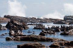 Cormorants and Rocks  Royalty Free Stock Photography