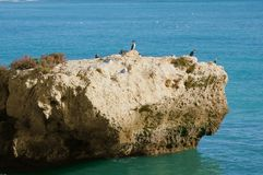 Cormorants and seagulls 1 royalty free stock photos