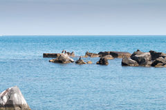 Cormorants on the rocks Stock Image