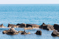 Cormorants on the rocks Royalty Free Stock Photos