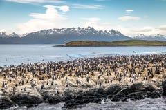 Cormorants sea birds island - Beagle Channel, Ushuaia, Argentina. Cormorants sea birds island in Beagle Channel, Ushuaia, Argentina royalty free stock photo