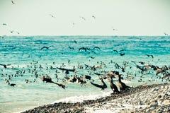 Cormorants on the sea coast Royalty Free Stock Images
