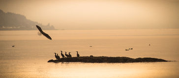 Cormorants and seagulls Royalty Free Stock Images
