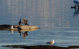 Cormorants and seagulls in Spain, Europe royalty free stock photography
