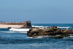 Cormorants Sit on Natural Rock Near La Jolla Children`s Pool Stock Image