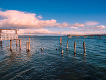 Cormorants sit on the piles near fishing pier in  Sidney, Vancou Royalty Free Stock Images