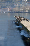 Cormorants, some gull and a heron Royalty Free Stock Photos