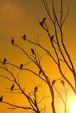 Cormorants in tree Royalty Free Stock Image