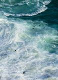 Cormorants and waves. Reed cormorants flying over crushing waves of Cape Point, South Africa Stock Image