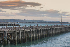 Cormorants on a wooden jetty Royalty Free Stock Photography