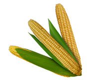 Corn_02 Fotografia de Stock Royalty Free