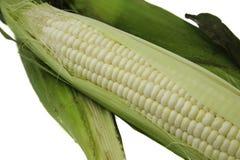 Corn 1 Stock Photo