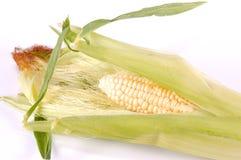 Free Corn Stock Image - 10307101