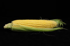 Corn. Fruit of corn on a black background Stock Images