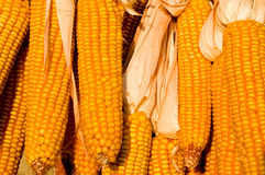 Corn. Flasks of corn, yellow colour Royalty Free Stock Photo