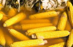 Corn. Cooking of corn. Corn ear and husk in water Stock Photography