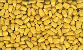 Corn. Maize Royalty Free Stock Image