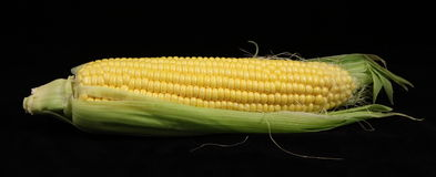 Corn. Stock Photo