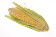 Corn. Fresh Corn from the field Stock Images