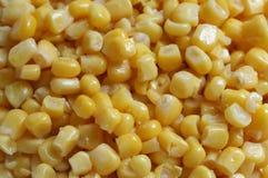 Corn. Lots of fresh, yellow corn-kernel Royalty Free Stock Images