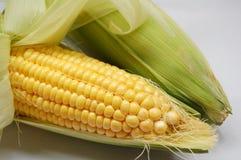 Corn. Peeled raw sweet corn with white backgroun Stock Photos