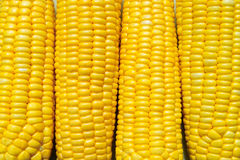 Corn Royalty Free Stock Photo