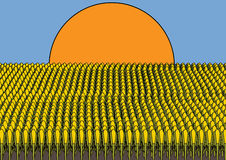 Corn. Conceptual illustration of a field with corn in the sun Stock Photo