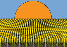 Corn. Illustration of a field of corn Stock Photography